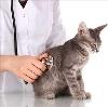 Ветеринарные клиники в Лангепасе
